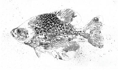 Crappie Abstract Poster