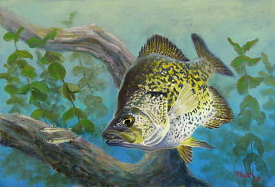 Crappies Twofer Poster by Marcus Moller