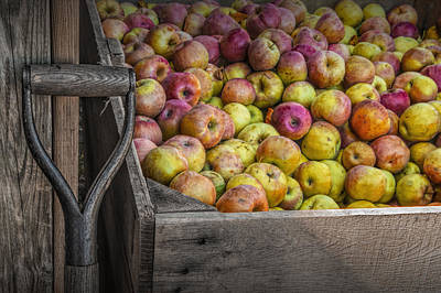 Crated Apples At The Cider Press Poster by Randall Nyhof