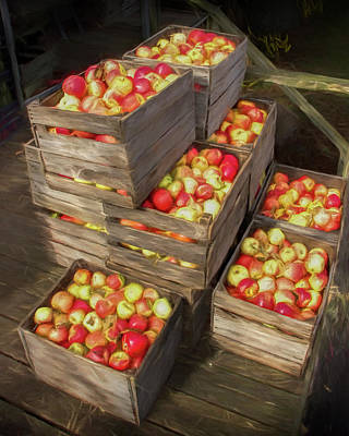 Crated Apples Waiting For The Cider Press Painterly Version Poster