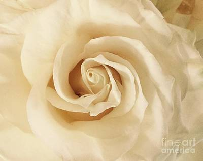 Poster featuring the photograph Creamy Rose by Mary K Conaboy