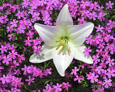 Creeping Fuchsia Phlox With Lily Poster by Nancy Lee Moran