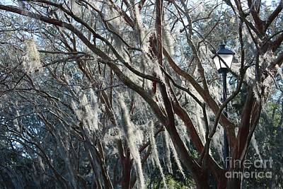 Crepe Myrtles In Winter With Lamppost Poster by Carol Groenen