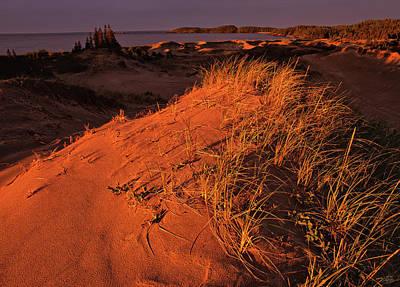 Crimson Dunes Poster