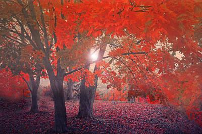 Crimson Leaves In The Mist Poster by Tara Turner