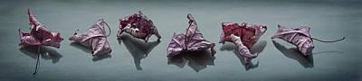 Crinkled Leaves  Poster by Maggie Terlecki