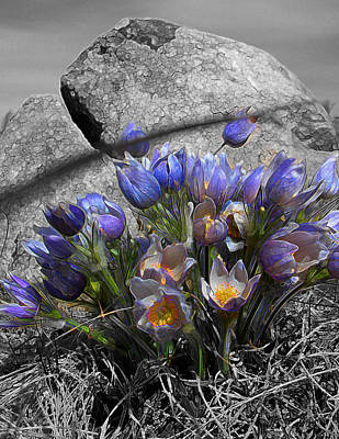 Poster featuring the digital art Crocus - Between A Rock And You by Stuart Turnbull