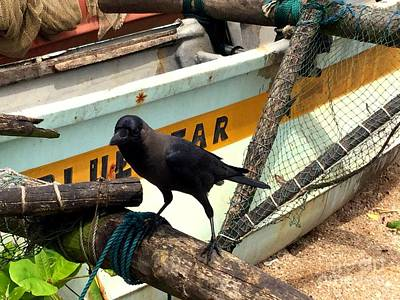 Crow N Boat Poster