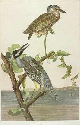 Crowned Heron Poster by John James