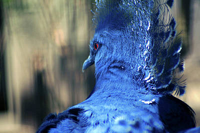 Crowned Pigeon Poster by Terry Cork