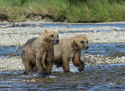 Poster featuring the photograph Cubs On The Prowl by Cheryl Strahl