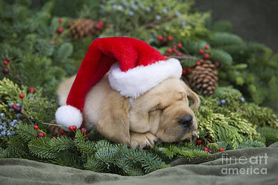 Cuddly Holiday Puppy Poster by Ron Dahlquist - Printscapes