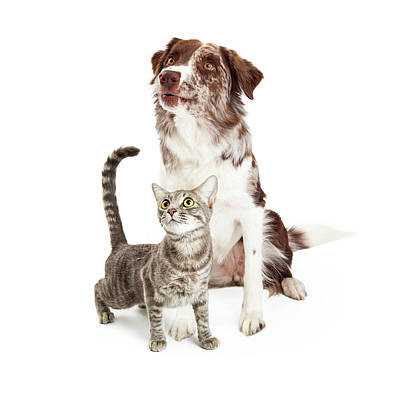 Curious Cat And Dog Looking Up Poster