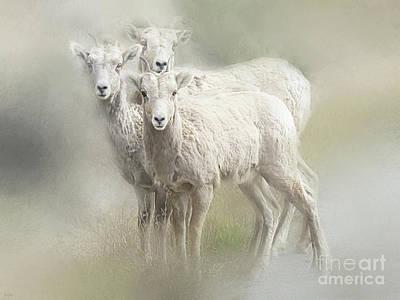Curious Goats Poster