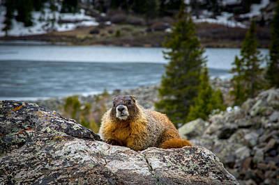 Curious Marmot Poster