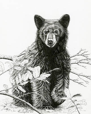 Curious Young Bear Poster