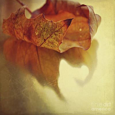 Curled Autumn Leaf Poster