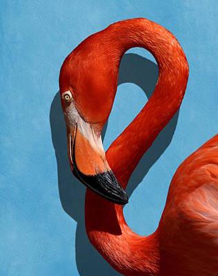 Curves, A Head - A Flamingo Portrait Poster