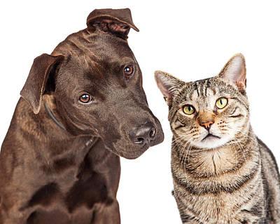 Cute Cat And Dog Closeup Photo Poster