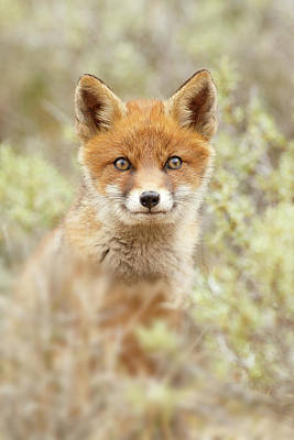 Cute Overload Series - Happy Baby Fox Poster by Roeselien Raimond