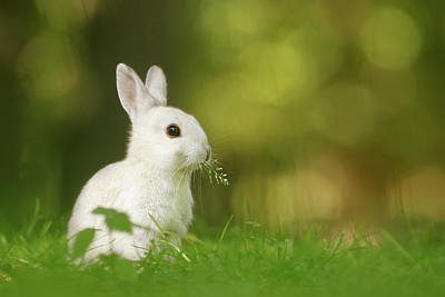 Cute Overload Series - Happy White Rabbit Poster by Roeselien Raimond