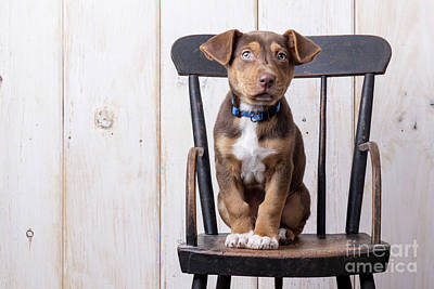 Cute Puppy Dog On A High Chair Poster
