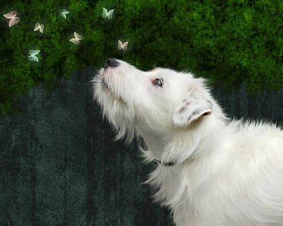 Poster featuring the photograph Cute White Jack Russel Dog by Ethiriel  Photography