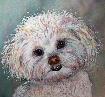 Cutest White Shih Tzu Poster by Sue Chorney