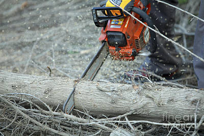 Cutting Firewood  Poster