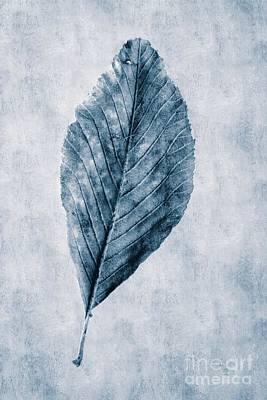 Cyanotype Leaf Poster