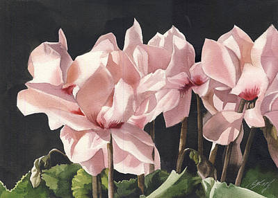 Cyclamen In Pink Poster by Alfred Ng