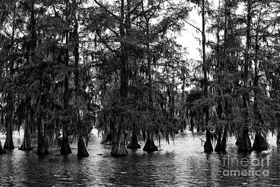 Cypress Black Lake Martin  Poster