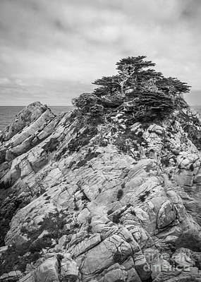 Cypress Island Poster by Alexander Kunz
