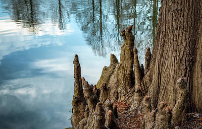 Poster featuring the photograph Cypress Knees by James Barber