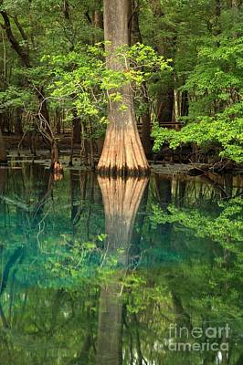 Cypress Reflections In Manatee Spring Waters Poster