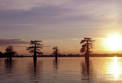 Cypress Sunset Poster by Sheila Ping