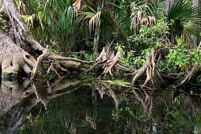 Poster featuring the photograph Cypress Swamp  by Barbara Bowen