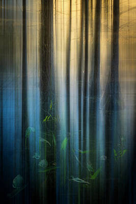 Cypress Swamp Dreamscape Poster