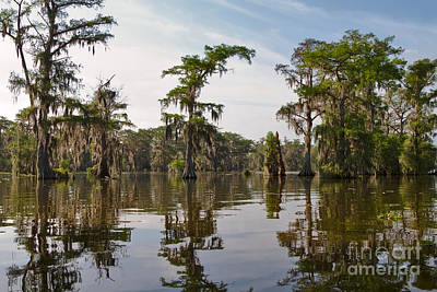 Cypress Trees And Spanish Moss In Lake Martin Poster