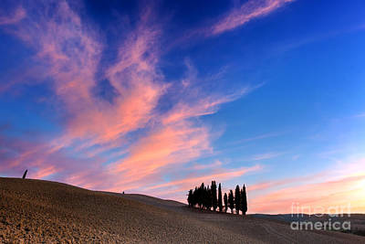 Cypress Trees On The Field In Tuscany, Italy At Sunset Poster