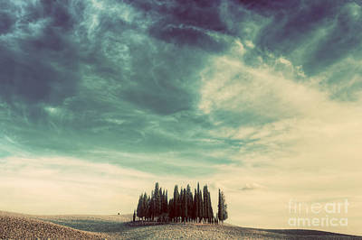 Cypress Trees On The Field In Tuscany, Italy At Sunset. Vintage Poster