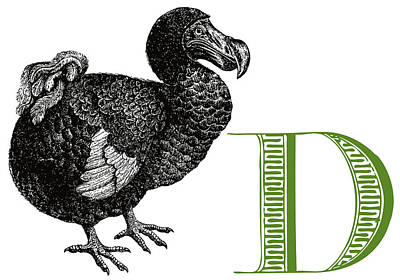 D Dodo Poster by Thomas Paul