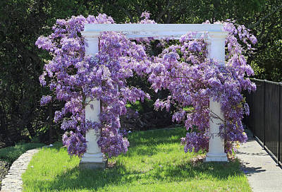 D6b6373 Wisteria In Bloom Poster