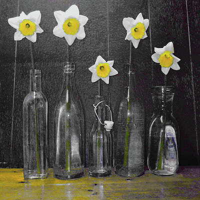 Daffodil Delight Poster by P Donovan