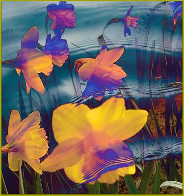 Daffodils #1 Poster