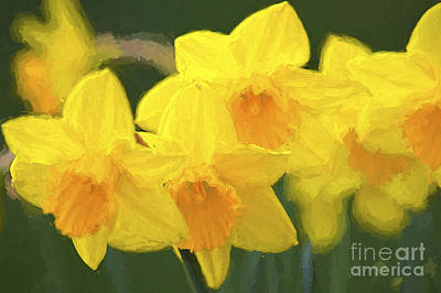 Daffodils Nodding Photoart Poster by Sharon Talson