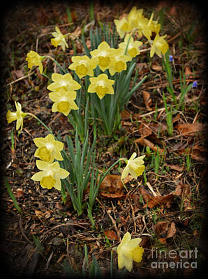 Daffodils With A Purple Flower Poster by Eva Thomas