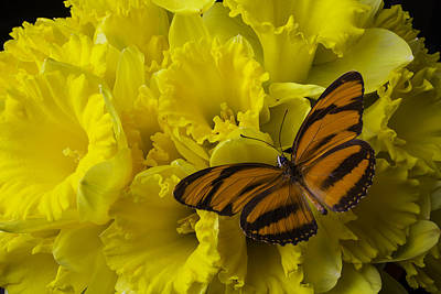 Daffodils With Butterfly Poster by Garry Gay