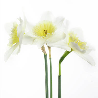 Poster featuring the photograph Dafs by Rebecca Cozart