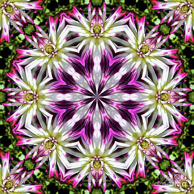 Dahlia Flower Circle Poster